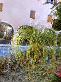 kokedama & co.: only #grasses