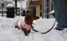 Addison sticks close to her mom in downtown Blacksburg. Addison had a jacket on, but she was shivering and had a hard time navigating the snowy sidewalk.