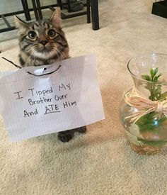 34 Examples Of Cat shaming From The Hall Of Shame Funny Animal Memes, Cute Funny Animals, Cat Memes, Funny Cute, Cute Cats, Funniest Animals, Animal Humour, Funny Kitties, Cat Fun