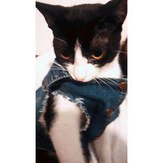 """52 curtidas, 3 comentários - coleteria ♡ (@coleteria) no Instagram: """"E quando seu cliente é um GATO? 😻 Ficou lindo com nosso colete jeans pet! ❤️ www.coleteria.com.br…"""""""