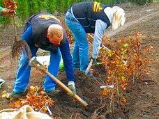 HERBST | Teil 2: Eine wurzelnackte Hecke pflanzen