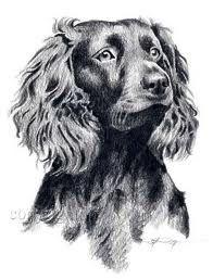 Boykin Spaniel puppy Obsessed Pinterest Boykin