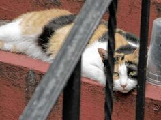 Feral cats at St. James Church without food for two weeks