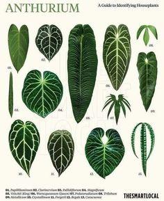 Garden Plants, Indoor Plants, Trees To Plant, Plant Leaves, Leaf Identification, Cactus E Suculentas, Household Plants, All About Plants, Belle Plante