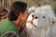 Earth Pics ‏@Emily Arth Pics   An albino lion enjoying a smooch.