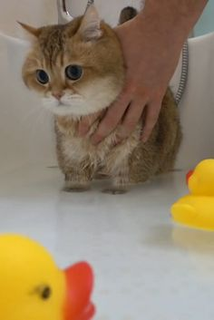Funny Cute Cats, Cute Baby Cats, Funny Cats And Dogs, Cute Cats And Kittens, Cute Funny Animals, Kittens Cutest, Cute Dogs, Cute Wild Animals, Cute Little Animals