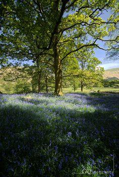 Grasmere, Cumbria, England by GQimageworx