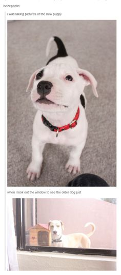 Dogs and Tumblr - Imgur