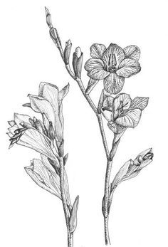 Image result for FREESIA TATTOO