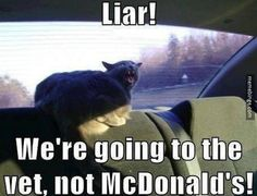 Would a cat even eat McDonald's?- Mine like their fries