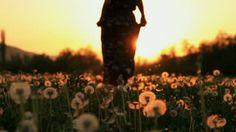 Beautiful Female Model in a Pink Dress Passing Throug Dandelion Field at Sunset - HD stock video clip