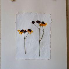 botanical pressed black eyed susan wildflowers  by StudioBotanica, $25.00