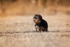 Fluffy puppy by Michaela Smidova on 500px