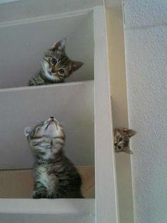 Kittens doing an Escher of sorts…