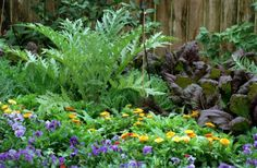 'Red Giant' mustard and cardoon happily share a garden with cool-season annuals. Photo: Betty Tichich, Chronicle