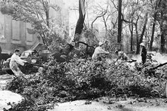 """The Columbus Day Storm of Oct. 12, 1962, aka """"The Big Blow,"""" was among the most intense in recorded history of the Pacific Northwest. Wind gusts reached 116 mph in downtown Portland, cities lost power for 2 to 3 weeks, more than 50,000 homes were damaged, and 38 people died, according to the National Weather Service. In this photo, published on the first anniversary of the storm, shows crews at work in the Park Blocks of downtown Portland."""