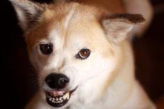 Descubre 10 cosas que los perros odian de los humanos y así podrás mejorar la relación con tu perro, disfrutando los dos de una relación con más... Bambi, Husky, Health, Tips, Beware Of Dog, Animals, Insects, Pets, Hipster Stuff