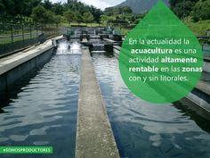 En la actualidad la acuacultura es una actividad altamente rentable en las zonas con y sin litorales. SAGARPA SAGARPAMX #SomosProductores