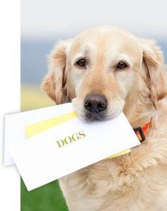 IQ-Training für Hunde | DOGS – Europas größtes Hundemagazin
