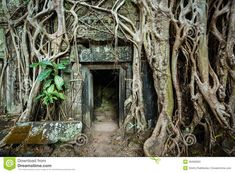 Ancient Stone Door And Tree Roots, Ta Prohm Temple, Angkor, Camb ...