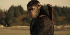 War for the Planet of the Apes: Final Trailer On the Way?