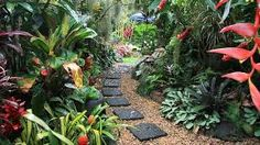 Image result for Luxurious tropical gardens
