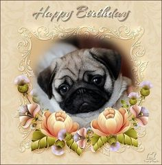 Pug Love I Dogs Animal Birthday Greetings Memes