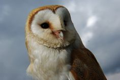 Working with Animal Spirit Guides. Who are Animal Spirit Guides? How can you meet your Animal Spirit Guide? And the benefits of working with them. From the Earth Energy Healings Blog.