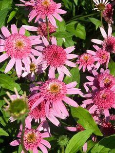 554 Best Flowerplant Identification Images On Pinterest Planting
