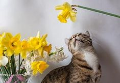 If You Have a Pet, Get Rid Of These Plants Immediately! - The Lost Herbs Backyard Plants, House Plants, Owning A Cat, Public Garden, Daffodils, Cattle, Planting Flowers, Your Pet, Rid