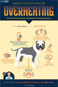 Panting isn't the only warning sign that your dog is overheated. Know the warning signs to keep your pet safe this summer. Flat Faced Dogs, Summer Safety, Best Swimmer, Healthy Pets, Cat Behavior, Pet Safe, Animal Party, Humane Society