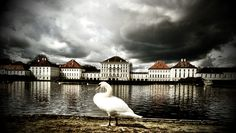 Swan in front of Schloß Nymphenburg - Munich