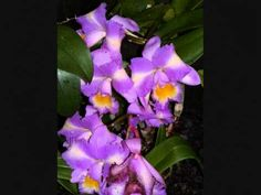 Erotic short story extract: Missy Maybe reads Precious Orchids by Elizab...