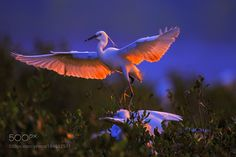 Dancing in glow by 2574043315 #animals #animal #pet #pets #animales #animallovers #photooftheday #amazing #picoftheday