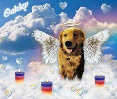 @HelpForBear friend @iliveforthis212's doggie #Oakley