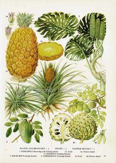 Pineapple Ceriman Sour Sop & Cherimoya by SurrenderDorothy on Etsy