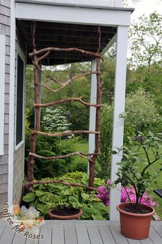 The trellis has been hung! I used the grapevine garland to hide the wires that actually support this structure. The moonflower have been planted in a large pot so that they are at deck level and will get good morning light. I've also used a piece of bark covered wire to guide the vines from the pot to the first two tiers of branches. After that they should be good to go on their own.