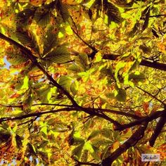 """Transition"" The story behind this picture:  https://www.facebook.com/photo.php?fbid=507932932618604&set=a.507932875951943.1073741838.481203088624922&type=3&theater  #photography #fotografie #print #landschap #licht #yellow #gold #geel #goud #tree #bomen #bos #bomen #groen #bladeren #blad #herfst #wandeling #walk #flevoland #almere #natuur #decoratie #decoration #interieur #sfeer #perspex #poster #artprint  #gift #kado #laaurelia #aurelia #iphoneonly #autumn #indiansummer #september #fall"