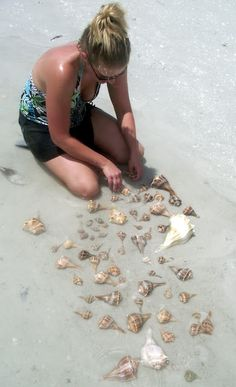 Lightning whelks on Sanibel after Tropical Storm Debby. Rock Hunting, Captiva Island, Shell Collection, Fort Myers Beach, Shell Beach, Ocean Themes, Vacation Places, Marine Life, Cruises