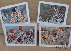 Fall Meets Winter Card Pack...4 cards... Fall Colors and Frost ...Fine Art Photography Greeting Cards