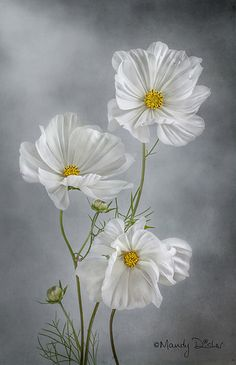 pictures of exotic flowers and butterflies Cosmos Flowers, Flowers Nature, Exotic Flowers, Amazing Flowers, White Flowers, Beautiful Flowers, Exotic Plants, Tropical Flowers, Art Floral
