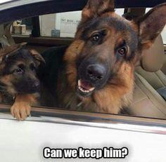 145 Best Cute animal memes images in 2016 | Cute animals