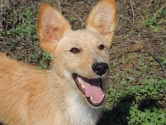 ACE Animal Care España - Djoef and Djaf were brought to us by their hunter......