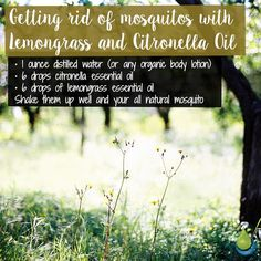 Getting rid of mosquitos with Lemongrass and Citronella Oil 🌸🌸🌸 Lemongrass Oil, Lemongrass Essential Oil, Essential Oils, Citronella Essential Oil, Citronella Oil, Natural Mosquito Repellant, Distilled Water, Lemon Grass, Body Lotion