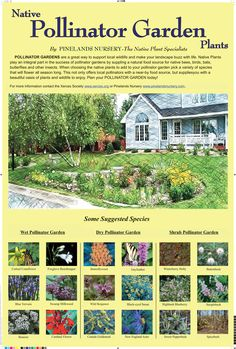 Pollinator Garden Design projects ideas pollinator garden creative design pollinator gardens Native Pollinator Garden Plants