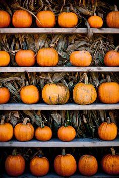 Queen of Halloween Pumpkin Farm, Pumpkin Carving, Pumpkin Spice, Carving Pumpkins, Autumn Cozy, Fall Winter, Autumn Feeling, Fall Days, Autumn Aesthetic