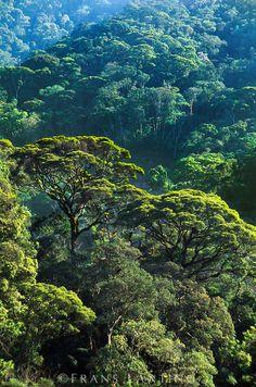 UNESCO World Heritage Site.  Sierra Dos Orgaos. Atlantic rainforest, Iguacu  National Park, BRAZIL