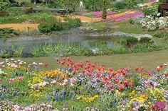 名古屋港ワイルドフラワーガーデン ブルーボネット|園内ガイド|花の谷