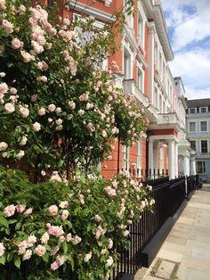 Pretty Primrose Hill, London