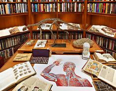 I WILL have a dinosaur skeleton in my library
